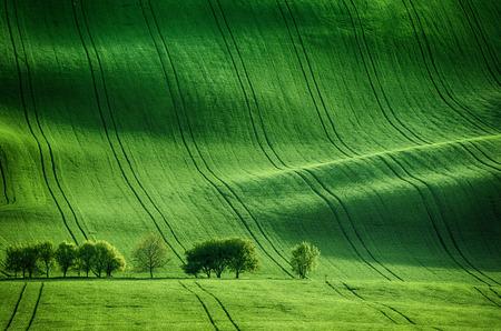 Zonnige glooiende heuvels met velden en bomen geschikt voor achtergronden of wallpapers, natuurlijke seizoensgebonden landschap. Zuid-Moravië, Tsjechië Stockfoto