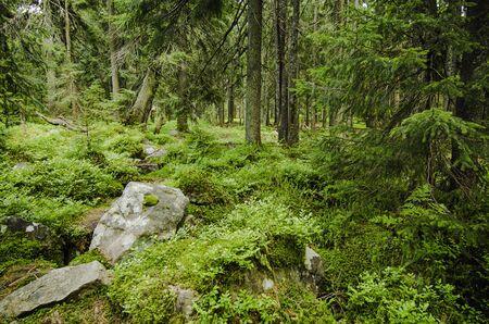 dense: Dense green forest