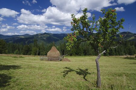 haymow: Carpathian mountains summer  landscape with blue sky, clouds and haystack, natural summer background