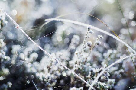 medow: Frozen meadow plant, natural vintage winter  background, macro image Stock Photo