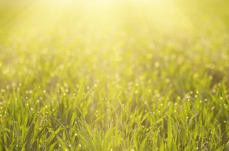 Zonnige groene grasveld geschikt voor achtergronden of wallpapers, natuurlijke seizoensgebonden landschap Stockfoto