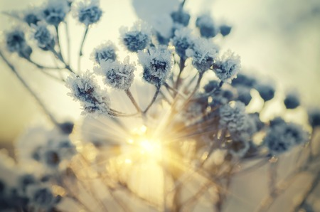 Bevroren installatie weide, natuurlijke vintage winter achtergrond, macro afbeelding met zon schijnt
