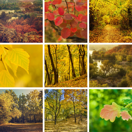 autumn colour: Collection from different kinds of autumn seasonal  backgrounds