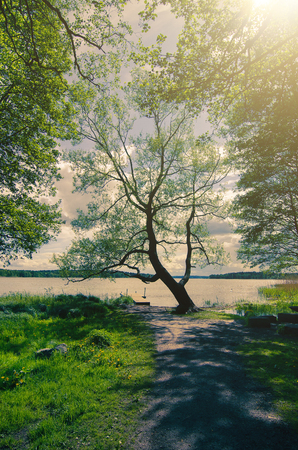 scandinavian landscape: Picturesque scandinavian sunny spring landscape with tree and lake, natural seasonal vintage hipster background