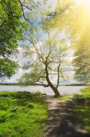 scandinavian landscape: Picturesque scandinavian sunny spring landscape with tree and lake, natural seasonal background