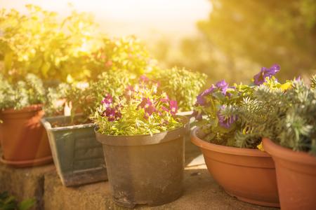 vasijas de cerámica con floración flores rojas y blancas en el parque con los rayos del sol