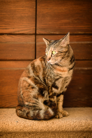 cute bi: Portrait of a tabby street cat with green eye sitting near wall and looking, animal natural background