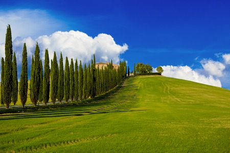 the tuscany: Villa in Tuscany with cypress road and blue sky with white clouds, idyllic seasonal nature landscape vintage hipster background