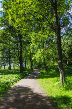 green park: Green sunny spring scandinavian park with hiking trail, tranquil natural seasonal background