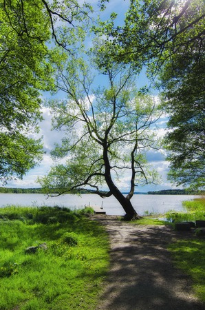 scandinavian landscape: Picturesque scandinavian spring landscape with tree and lake, natural seasonal background