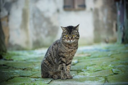 cute bi: Portrait of a tabby gray street cat with green eye sitting and looking in old european city, animal natural background