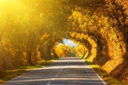 beautiful tree: Tunnel from the oak trees over a road in the Italy, natural seasonal european autumn background