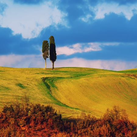 over hill: Tuscany landscape with two trees over hill and blue sky, natural background Stock Photo