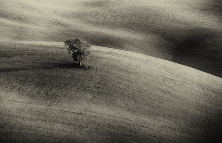 lonelyness: Lonely green tree over the hill in the Tuscany, Italy. Natural landscape background - black and white monochrome image Stock Photo