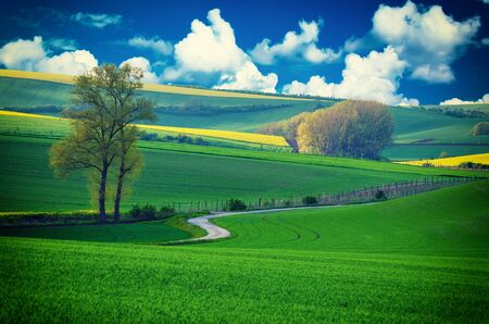 green fields: Rural landscape with green fields, road and blue cloudy sky , South Moravia, Czech Republic Stock Photo