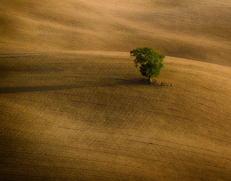lonelyness: Lonely green tree over the hill in the Tuscany, Italy. Natural landscape background Stock Photo