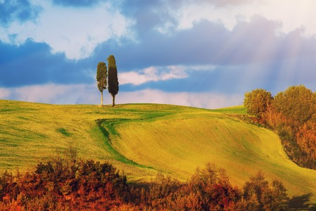 over hill: Tuscany landscape with two trees over hill and blue sky, natural background with sunlight