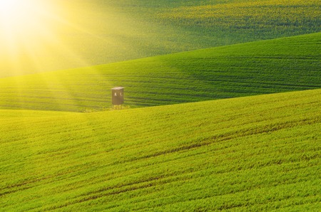 shack: Rural sunny landscape with green grass field and wooden hunting shack , South Moravia, Czech Republic