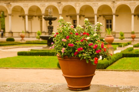 Ceramic pots with blooming red and white flowers in the park with green lawn and antique building patio at the background Stock Photo