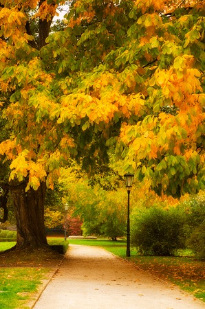 Autumn park with orange trees and empty alley, natural seasonal background
