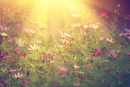 tender: Violet tender flowers