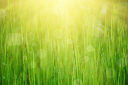 日当たりの良い自然な背景