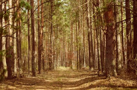 suomi: North scandinavian forest