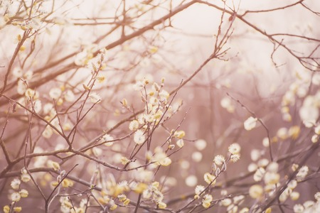 Blooming willow branch