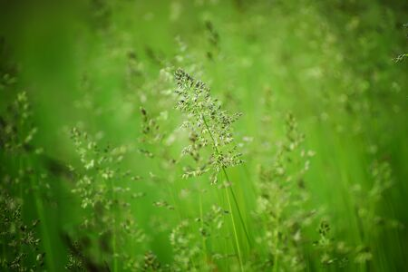 Green grass meadow