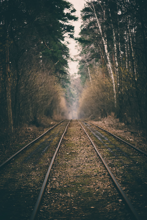 forest railroad: Rails in the forest Stock Photo