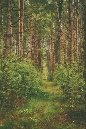 gloom: Dark moody forest