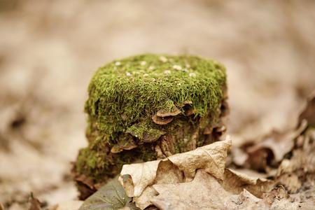 Stump with moss Stock Photo