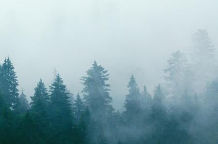 Foggy morning landscape Banco de Imagens