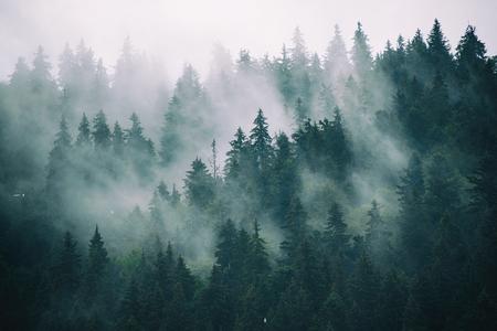 Misty mountain landscape