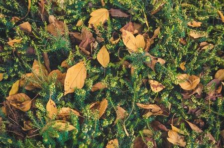 red carpet background: Autumn vintage background