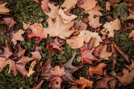 red carpet background: Autumn leaves background