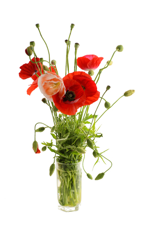 Bouquet of red poppies in a glass