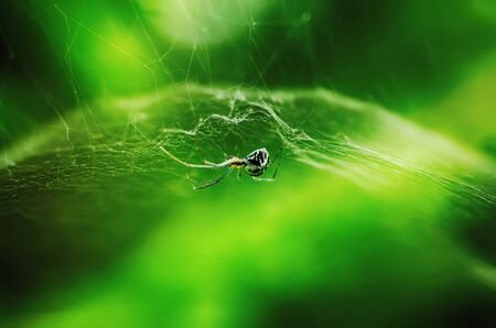 Cute spider in the web