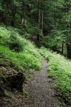 Dark moody forest