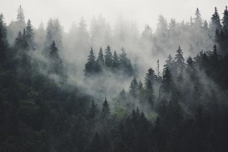 안개가 자욱한 산 풍경 스톡 콘텐츠 - 92847616