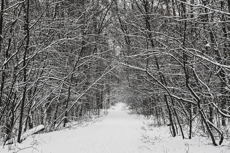 Winter forest with path and trees, covered with snow, natural outdoor seasonal background