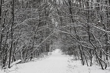 Winterwald mit Weg und Bäumen, mit Schnee bedeckt, natürlicher saisonaler Hintergrund im Freien Standard-Bild