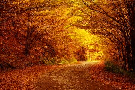 Piękny jesienny krajobraz