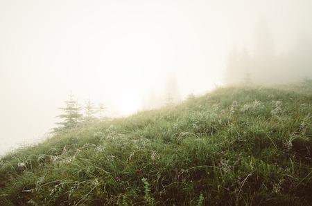 Foggy morning landscape 写真素材