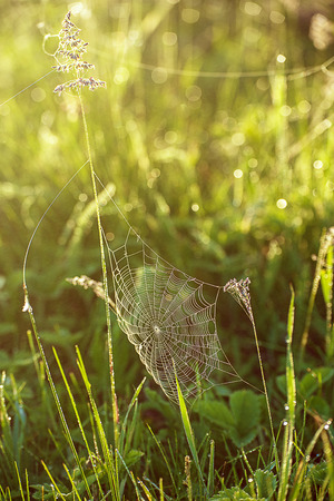 Plants with web