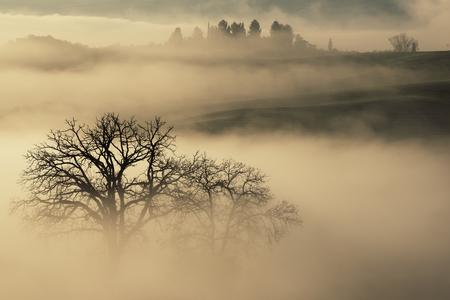 Drowned in the fog 写真素材