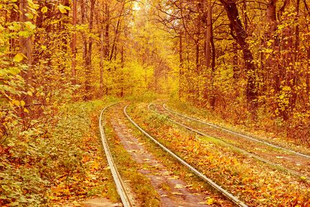 Rails dans la forêt