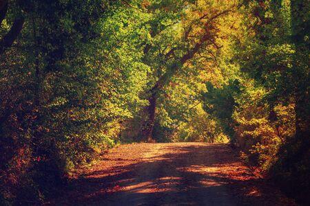 Tunel z drzew