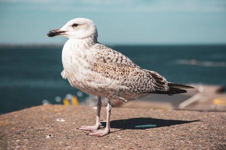 Sea gull at pier
