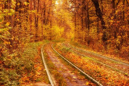 Rails in the forest Banco de Imagens - 131349974